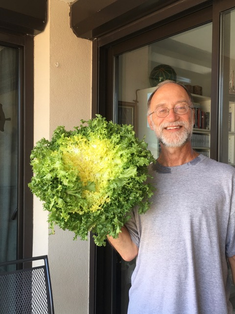 ross lettuce