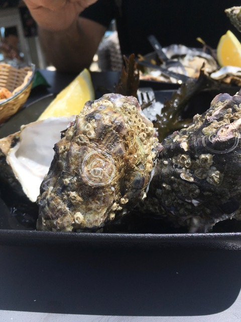 ross oysters